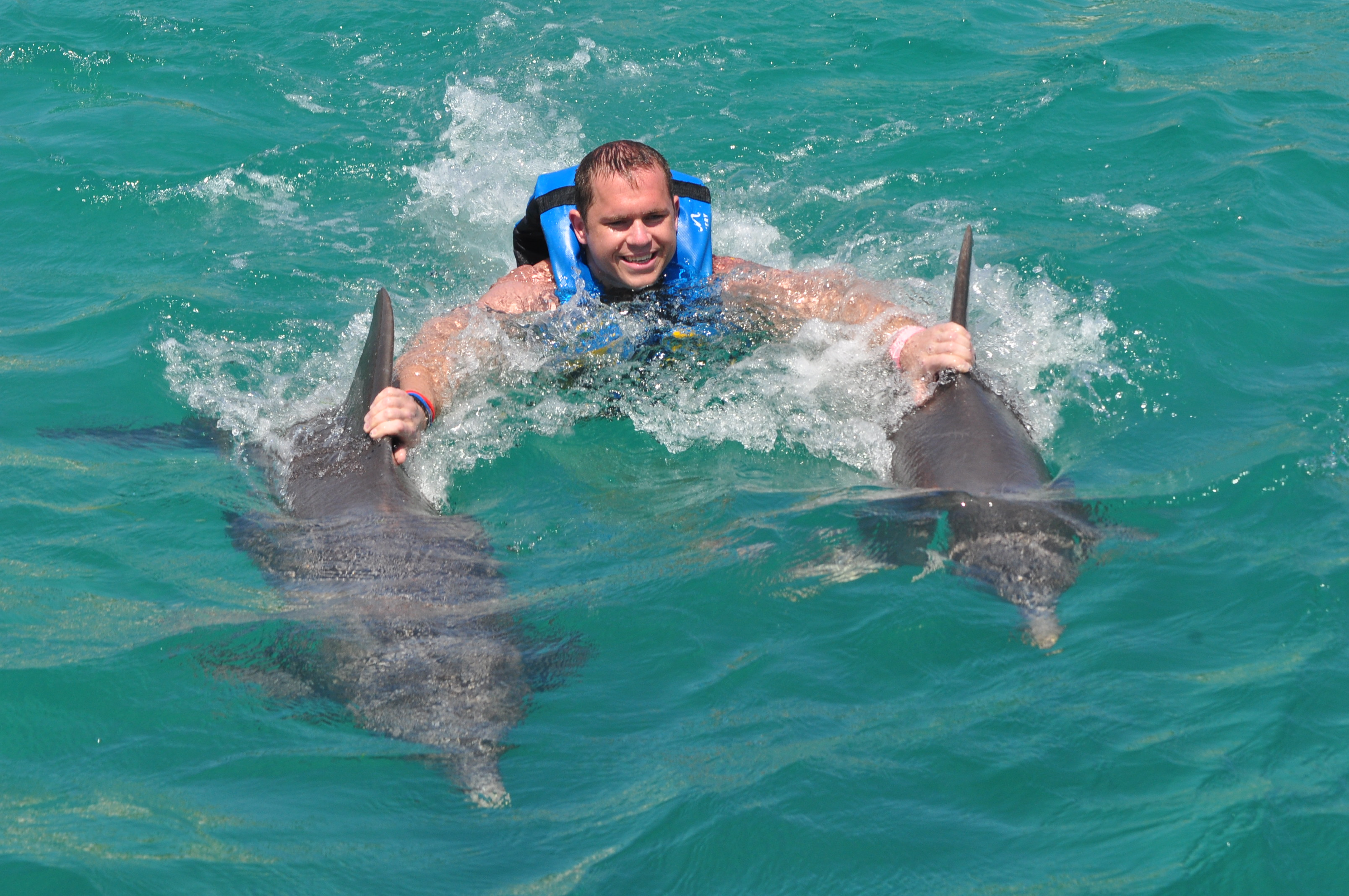 Swimming With Dolphins...